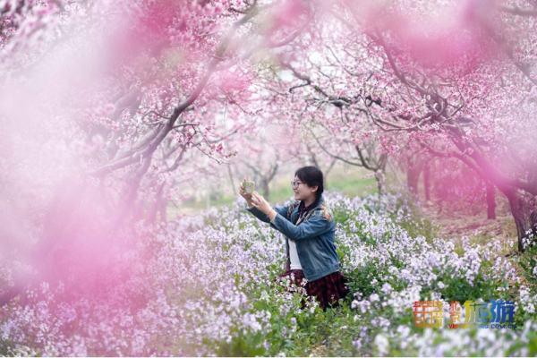 平谷第二十三届桃花节开幕
