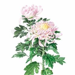 植物绘画艺术展