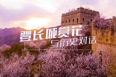 登长城赏花 与历史对话