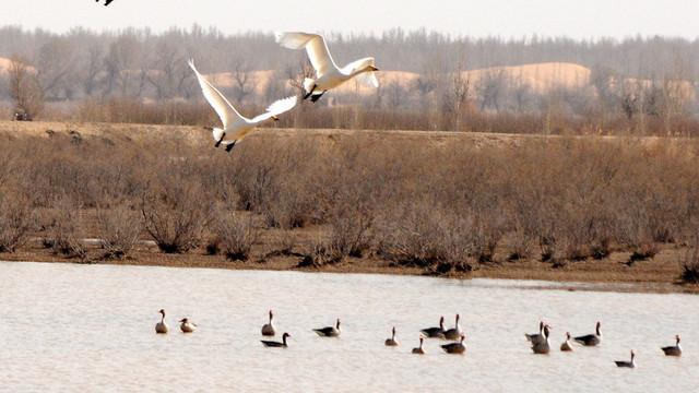 中國新指定7處國際重要濕地 天津北大港上榜