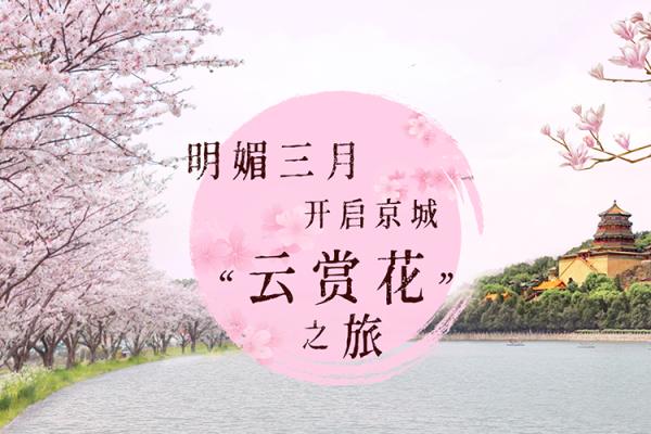 """京城""""云赏花"""""""