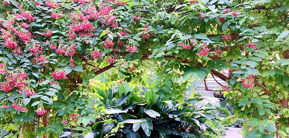 專訪世界花卉大觀園園長石文芳:1小時看遍世界奇花異卉