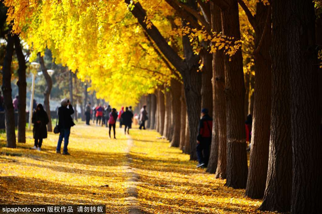 Fall in Love with Beijing in Autumn