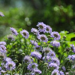 紫竹院初夏風光好