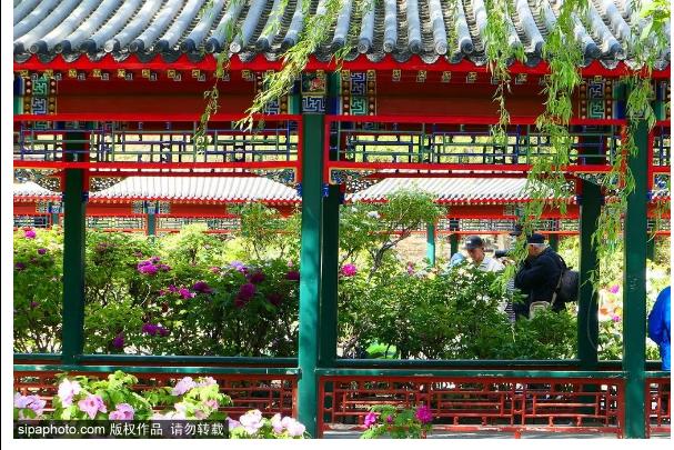北京资格最老的公交线之一,最高4元,带你领略京城最美胡同、街区、公园……