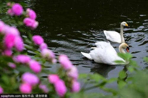 """北京这个动物世界里竟藏着一片""""童话仙境""""!现在去刚刚好!"""