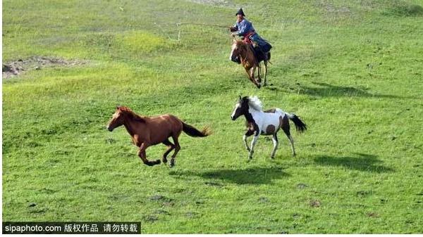京呼高铁要来了!北京出发至内蒙古不到3小时!烤全羊安排