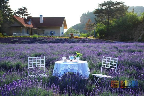 밀운 여름 꽃 여행 1. 운봉산 라벤더