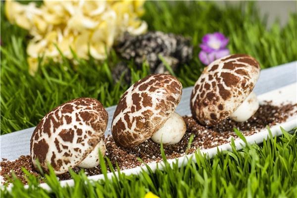 北京金融街丽思卡尔顿酒店:顺德大厨领衔,金阁中餐厅推出应季鲜蘑宴