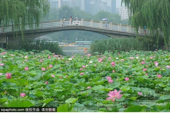 """@所有人!夏天最美的""""仙子""""就要告别了,北京这6个地方还能看到,抓紧!"""