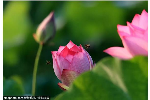 收藏!北京周边6月必打卡的6个地方,第一个就美哭200万+游客!