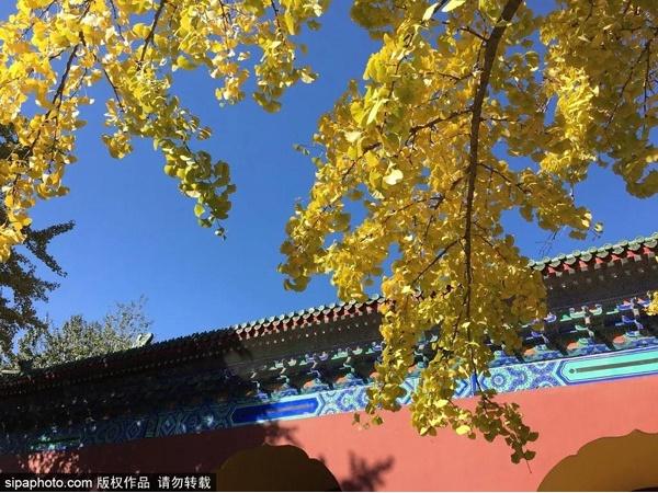 让全世界惊艳!北京最美季节已到,这些身边的梦幻赏秋地,全都免费!