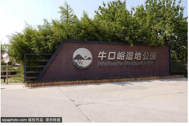 比玉渊潭大,比南海子有趣!北京这个秋日绝美公园人少景美野趣十足!