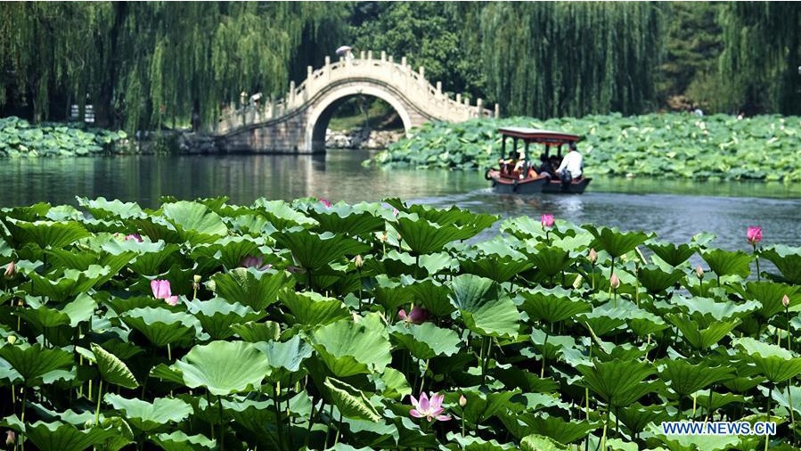 Scenery of lotus flowers at Yuanmingyuan Ruins Park in Beijing
