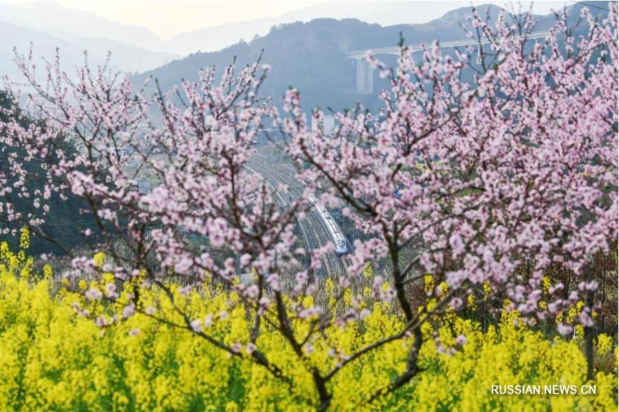 Цветущие поля в провинции Гуйчжоу