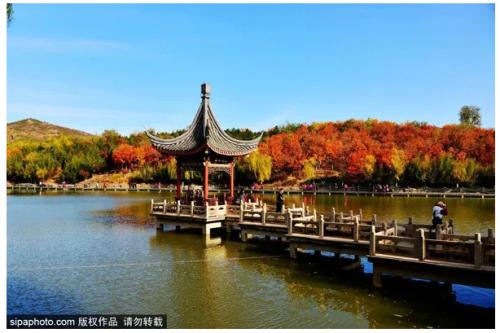 """比香山大4倍!北京这个""""小江南""""藏着京城绚丽多彩的秋色!"""