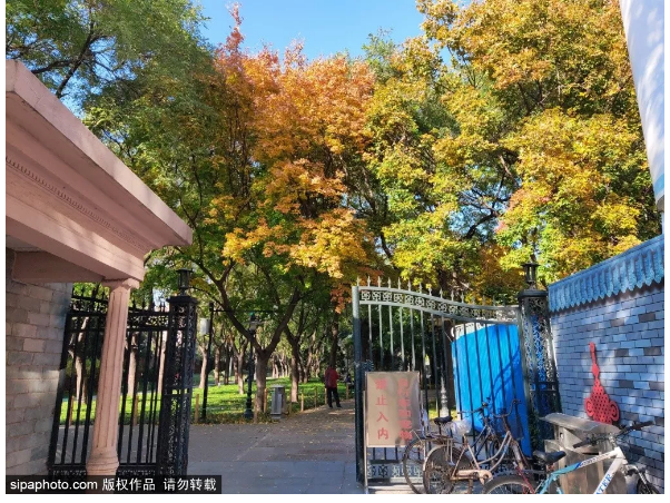 全都免费!这些地铁直达的公园藏着北京最后的秋色,错过等明年!