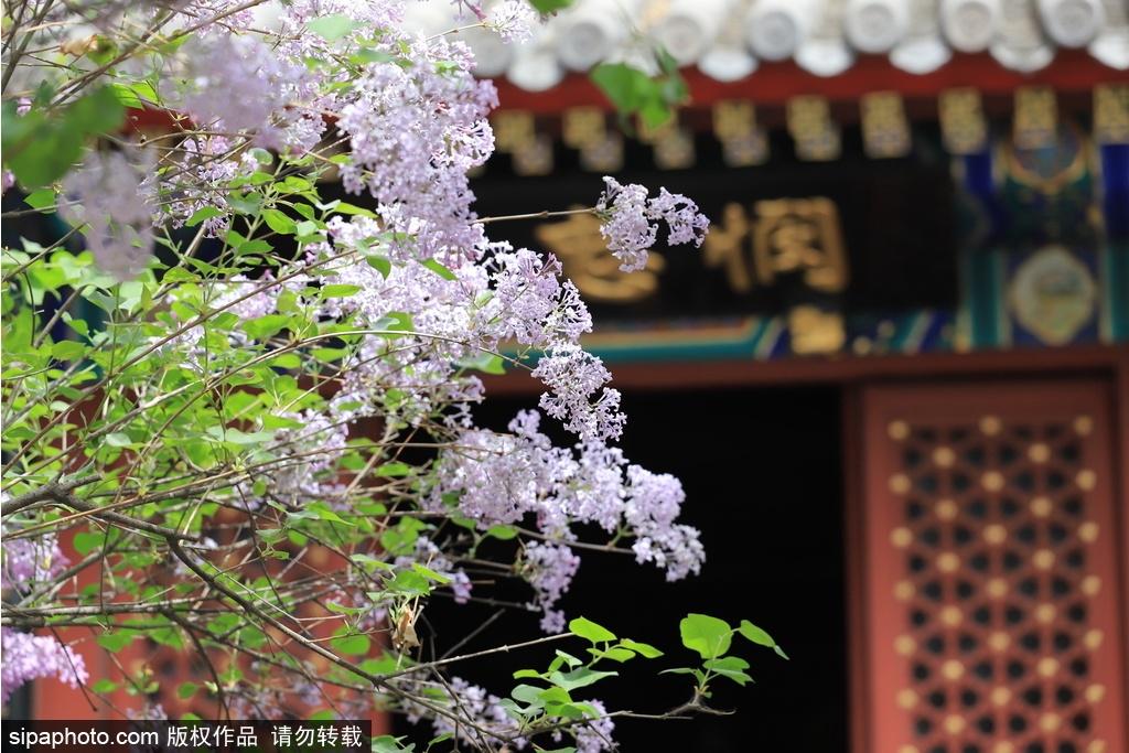 心靜之夏——在京城古寺感受禪境幽涼