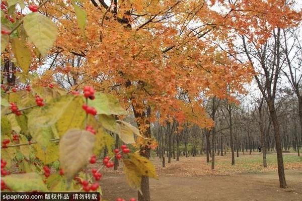 比故宫大3倍!景色堪比颐和园!北京这个郊野公园,人少景美还免费!