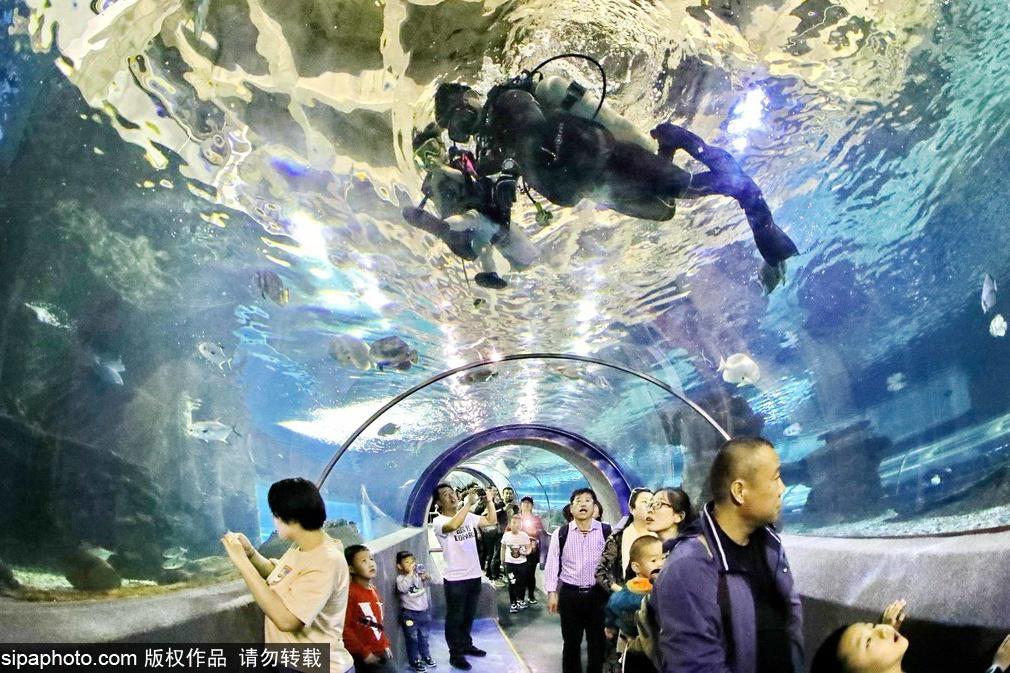 與群魚嬉戲——閑暇時光就去北京的這些海洋館