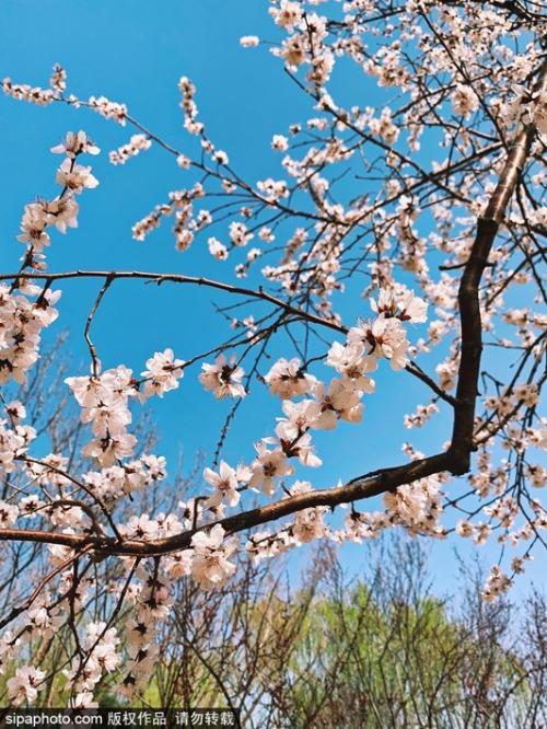 """北京龙泉宾馆""""安心入住"""" ,赏花图鉴带你看遍京西花景!"""