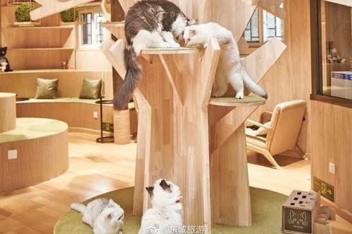 MoCHA:猫咪咖啡店里撸猫喝咖啡