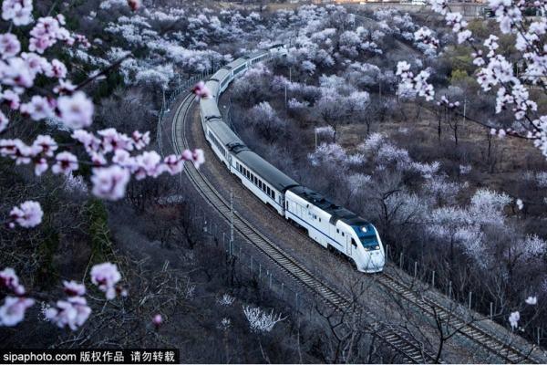 京城172处赏花片区翘首待客