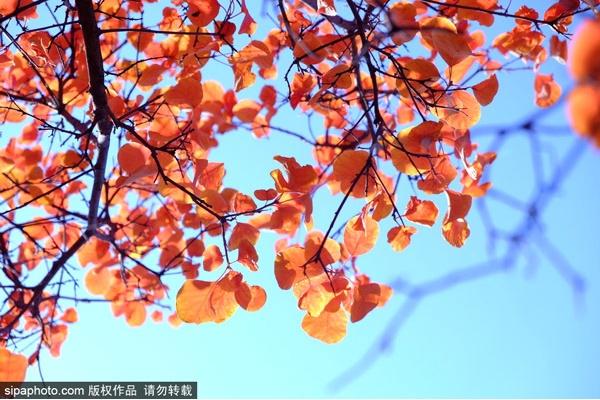 2019年北京最美风景区赏红叶攻略来啦