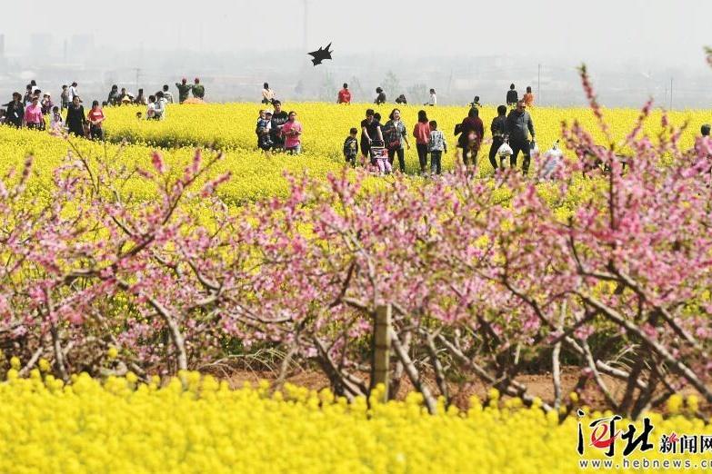 河北省打造農業精品園區
