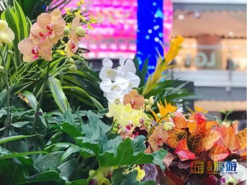 """美美美!北京冬天免费赏花好去处,""""未来花朵""""寒风中绽放,竟如此浪漫与文艺!"""