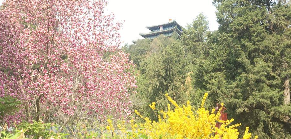 美爆了!海棠、郁金香、玉兰、牡丹……都藏在故宫对门的这个公园里