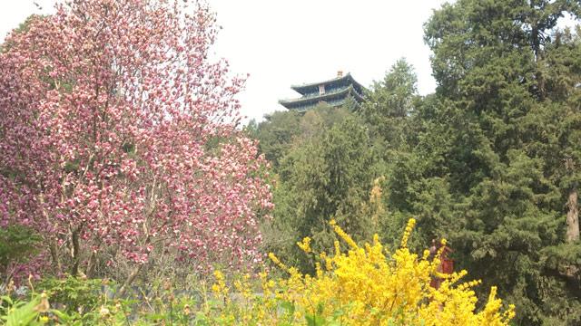 美爆了!海棠、郁金香、玉蘭、牡丹……都藏在故宮對門的這個公園里