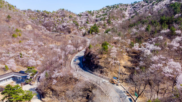 桃花娇艳,杏花如雪,北京这条梦幻公路刷屏了