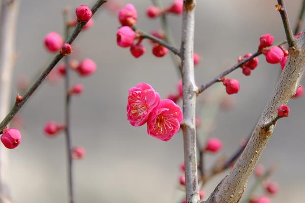 来京城遗址公园,寻觅最美的春天