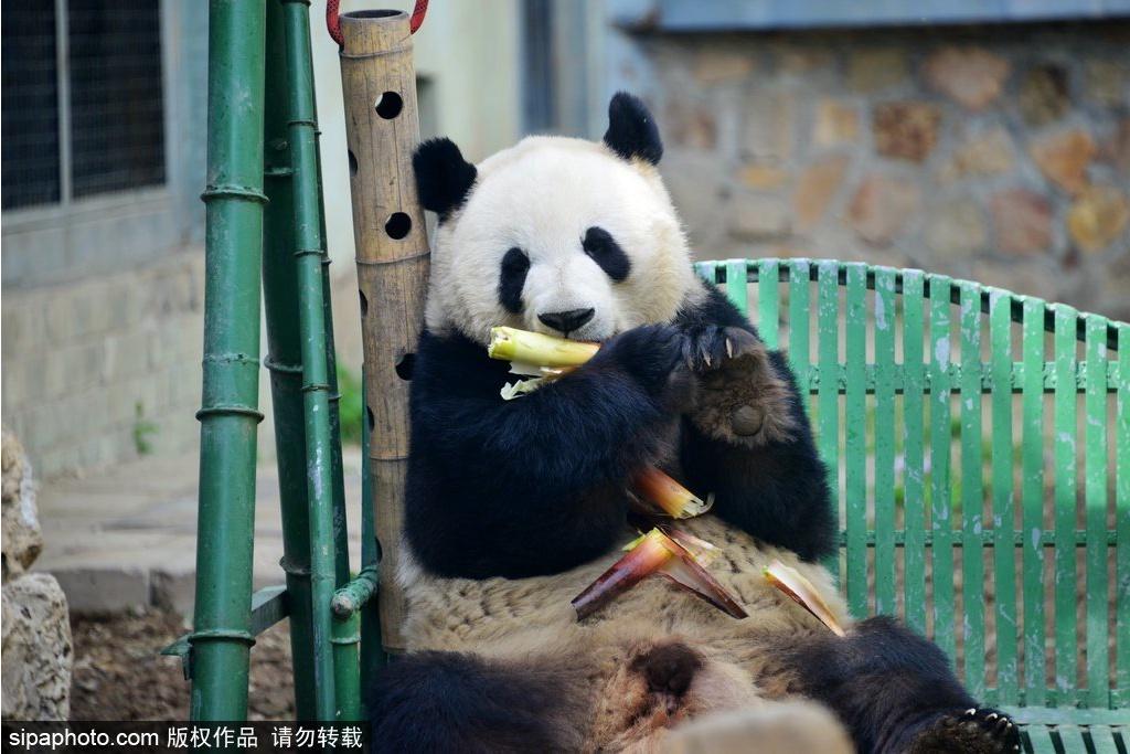 Primer día: Zoológico de Beijing, Mercado de las Perlas