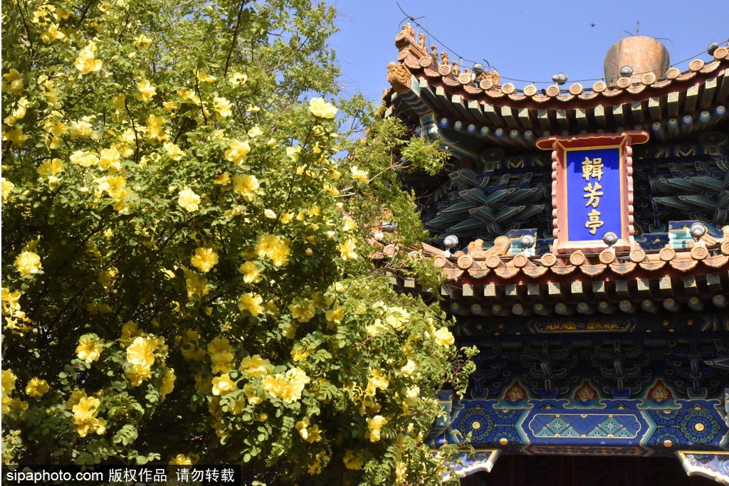 Primer día: Parque Jingshan, Shichahai