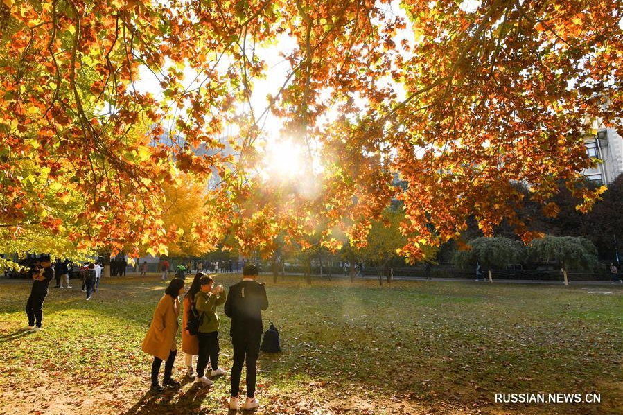 Живописные осенние пейзажи в университетских кампусах Пекина