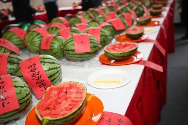 第32届北京大兴西瓜节开幕了!