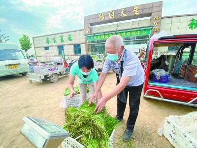 大兴种植合作社连接菜农和社区:地头菜不愁销 安心菜当天到