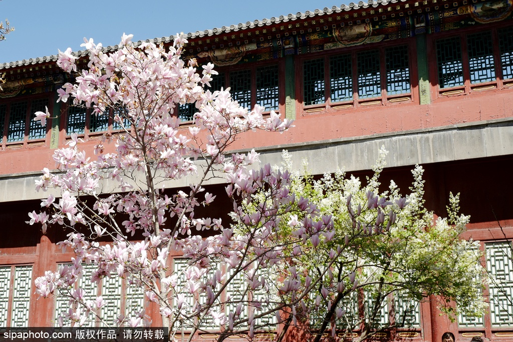 A special spring in Beijing