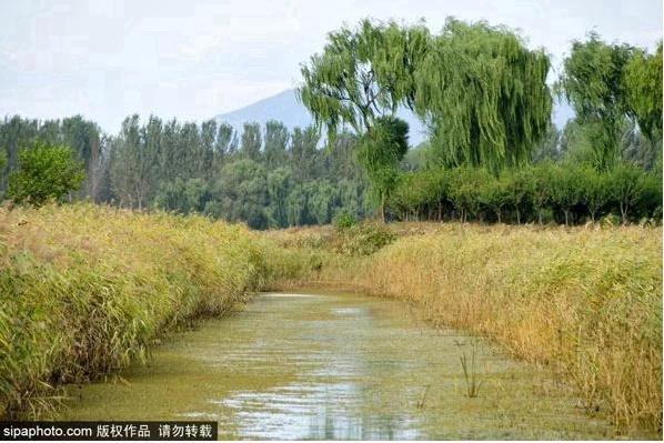 Le roseau est le premier rôle de l'automne : Zone humide de Hanshiqiao