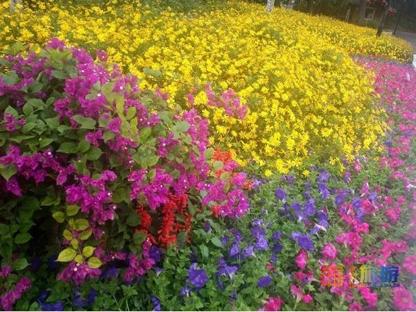红叶初绽,姹紫嫣红!这个三环边上的大公园,满园秋色让人沉醉,门票只要2元