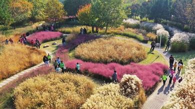 秋日芊卉园五彩斑斓