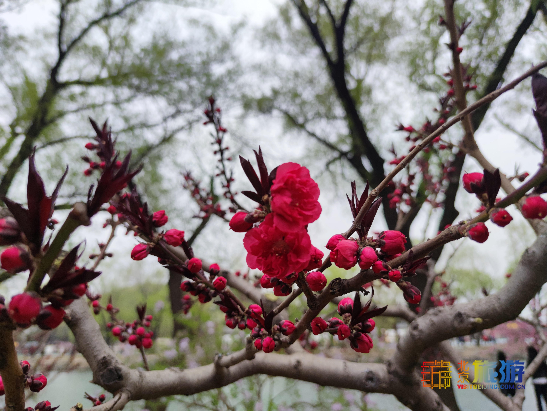 Le Palais d'été est rempli de fleurs en pleine floraison