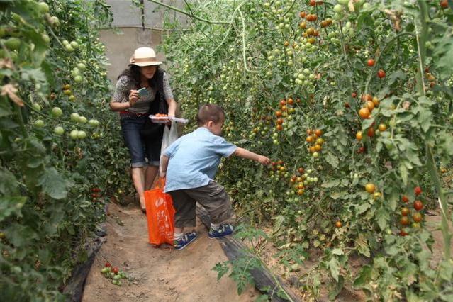 來密云采摘園,感受真實農家生活,體驗豐富多彩活動