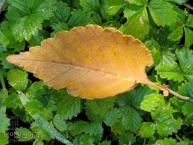 입추 (立秋), 가을 문턱의 더위