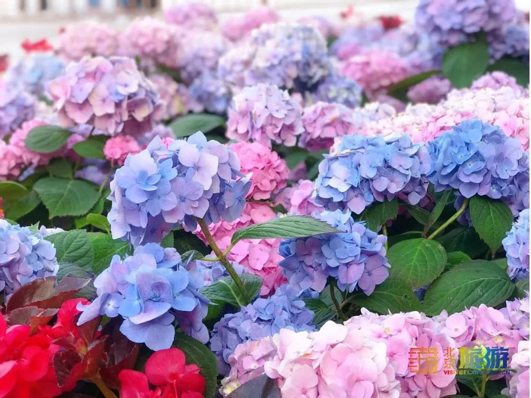 """嘘!二环边上""""小江南"""",唯美无尽夏+月季花海,90%的人竟没发现隐藏景点"""
