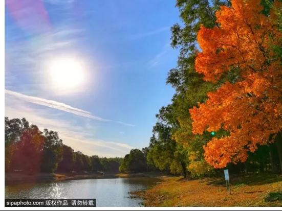 베이징 가을 나들이, 올림픽 삼림공원