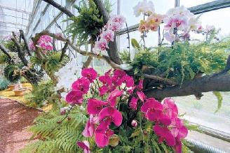 園林新優植物又添奇珍:426個新優品種亮相 市民可預約免費參觀