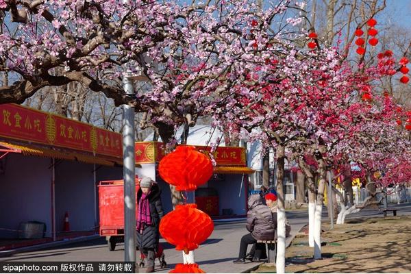 第三十七届龙潭春节学问庙会将于1月25日(正月初一)开门迎客